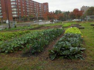 School garden on the food tour